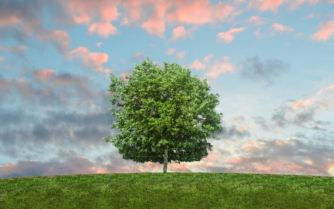 Environment Week: 7 Ways to Use Fewer Utilities